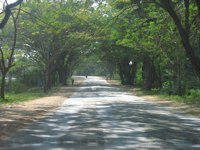 Stretch of tree-lined highway between Bangalore to Mangalore